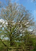 Image for Shoe Tree - Chapel Lane, Letty Green, Hertfordshire, UK.