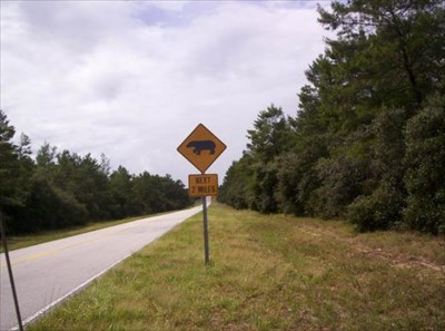 Bear Crossing Ocala National Forest Florida Uncommon Crossing Signs On Waymarking Com