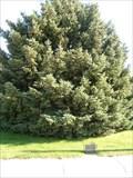 Image for The Freedom Tree - Chappell, Nebraska