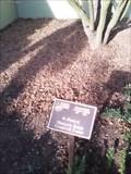 Image for Marjorie Helen Cromwell Foster - Botanical Garden of the Ozarks - Fayetteville AR
