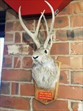 Image for Texas Jackalope - Dairy Palace - Canton, TX