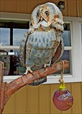 Image for Wise Old Owls - Drummond, Montana