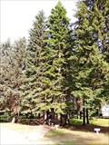 Image for Savenac Historic USFS Nursery  - Haugan, MT