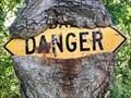 Image for DANGER omnivorous tree - Cumberland, Rhode Island