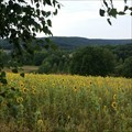Image for Sunflowers - Ibra, Germany