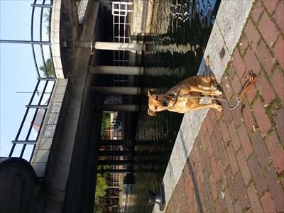 My dog Honey sitting by the bridge.
