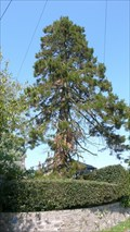 Image for Green End Cottage Redwood tree, Hincaster, Cumbria