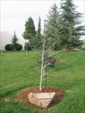 Image for Veteran's Memorial Tree - Milpitas, CA