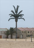 Image for Electric Palm, Langstrand, Walvis Bai, Namibia