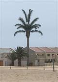 Image for Electric Palm, Langstrand, Walvis Bai, Namibia