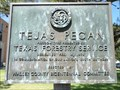 Image for Tejas Pecan - Waller County Courthouse - Hempstead, TX