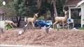 Image for Deer - Morgan Hill, CA