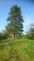 Image for Redwood trees in Hedeland