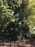 Image for Sister Marie Sagues - San Rafael, CA