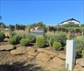 Image for Weisinger's Vineyard Winery, Ashland, Oregon