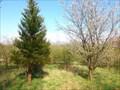 Image for Redwood tree in Vestskoven