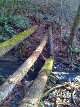 Alder Creek 12-11-2011