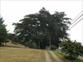 Image for Monterey Cypress - Brookings, Oregon