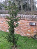 Image for The Millennium Yew - Pipewell Church, Northamptonshire, UK