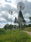 Image for Dandelions - Trentham Gardens - Trentham, Stoke-on-Trent, Staffordshire, UK.