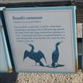 Image for Cormorants  -  Pebble Beach, CA
