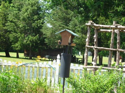 Is that a bird`s tailfeathers at the feeding station?