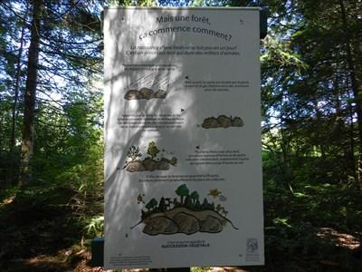 Panneau d'interprétation sur la forêt