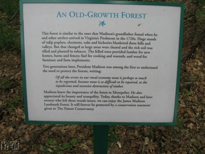 This forest is like the one Madison`s grandfather found in the 1720s. Madison helped to preserve these very woods.