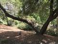 Image for Jess Richmond Speckart - Walnut Creek, CA