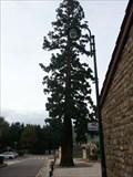 Image for Le séquoias de Pelussin (Loire) FRANCE