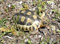 Image for Angulate Tortoise at Robben Island - Cape Town, South Africa