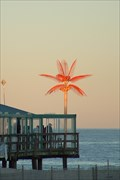 Image for Electric Palm - Point Pleasant Beach, NJ