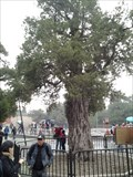 Image for Nine-dragon Juniper - The Temple of Heaven, Beijing, China