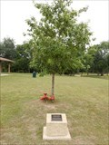 Image for Organ Donor Oak - Selma, TX