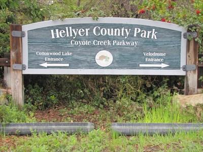 Hellyer County Park Dog