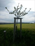 Image for Dedicated Trees-Appletree 'Roter Eiserapfel' - 96352 Effelter/Germany/BY