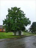 Image for Tree of the republic - Lisice, Czech Republic