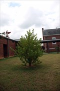 Image for Second Generation Sycamore - Hartwell Elementary School, Hartwell, GA
