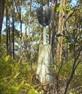 Image for Minnie Water trig, NSW