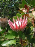 Image for Kirstenbosch National Botanical Garden - Cape Town, South Africa