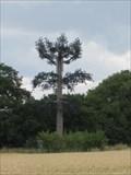 Image for Pine Tree - Haynes West End, Bedfordshire, UK