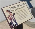 Image for Joshua Tree - Baker, CA
