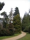 Image for Pinetum - Chatsworth House, Bakewell, Derbyshire, UK