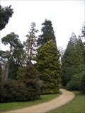 Image for Pinetum - Chatsworth House, Bakewell, Derbyshire, UK
