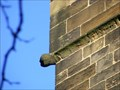 Image for Gargoyles, St. Mary's Church, Barnsley.