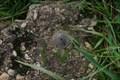 Image for RD Meetpunt: 239304 - Nieuw-Schoonebeek