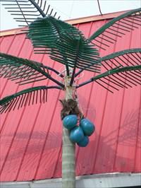 Un palmier de jour.