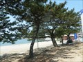Image for Windbreak Pine Tree Forest in Shongho-ri (Monument No. 142)