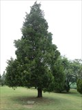 Image for The tree of Hope, Flame of Hope Memorial Park, Virginia Beach, VA