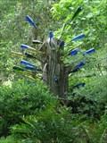 Image for Kanapaha Botanical Gardens Bottle Tree - Gainesville, FL